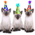siamese kittens celebrating a birthday with hats stock photo © tobkatrina