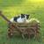 グレー · 白 · 猫 · 草 · 美しい - ストックフォト © tobkatrina