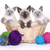 korthaar · kitten · witte · vergadering · samen - stockfoto © tobkatrina