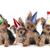 birthday theme yorkshire terrier puppies on white stock photo © tobkatrina
