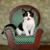 мало · котенка · сидят · Председатель · Cute · Extreme - Сток-фото © tobkatrina