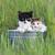 белый · кошки · зевать · зеленая · трава · зеленый · завода - Сток-фото © tobkatrina