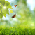 zomer · tijd · abstract · optimistisch · achtergronden · voorjaar - stockfoto © tolokonov