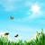 pillangó · százszorszép · mező · tavasz · fű · tájkép - stock fotó © tolokonov