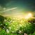 夏 · 午前 · 草原 · 自然 · 背景 · 空 - ストックフォト © tolokonov