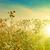 napfény · lomb · absztrakt · természetes · hátterek · nyár - stock fotó © tolokonov