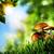wonder · dag · zomer · weide · abstract · natuurlijke - stockfoto © tolokonov