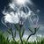 naturale · energia · erba · verde · isolato - foto d'archivio © tolokonov