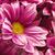 abstract · floreale · sfondi · design · fiore · foglia - foto d'archivio © tolokonov