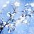папоротник · Blue · Sky · дерево · природы · лист · фон - Сток-фото © tolokonov