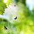 kelebek · bitki - stok fotoğraf © tolokonov