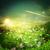 arte · verão · nascer · do · sol · prado · céu · flor - foto stock © tolokonov