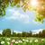 ромашка · цветы · туманный · луговой · аннотация · природного - Сток-фото © tolokonov