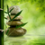 taze · bambu · yaprakları · su · çim · arka · plan - stok fotoğraf © tolokonov