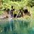 wild nature   plitvice lakes croatia stock photo © tomasz_parys