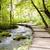 fából · készült · ösvény · Horvátország · kicsi · víz · tájkép - stock fotó © tomasz_parys