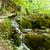 beauty pleace   plitvice lakes croatia stock photo © tomasz_parys