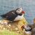 семьи · Исландия · птица · воды · природы - Сток-фото © tomasz_parys