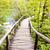 fából · készült · ösvény · Horvátország · víz · tájkép · hegyek - stock fotó © tomasz_parys
