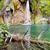 waterfall   plitvice lakes stock photo © tomasz_parys
