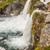 Rapid river - Westfjords, Iceland. stock photo © tomasz_parys