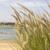 エジプト · 海 · 植物 · ビーチ · 海 · 水 - ストックフォト © Tomjac1980