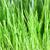 草原 · クローズアップ · 緑の草 · することができます · 中古 · 水 - ストックフォト © Tomjac1980