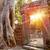 templom · naplemente · Kiotó · Japán · égbolt · épület - stock fotó © tommyandone