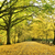 落葉性の · 森林 · ツリー · 木 · 雨 · 光 - ストックフォト © tony4urban