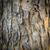 dąb · kory · pionowy · tekstury · drzewo · tle - zdjęcia stock © tungphoto
