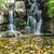água · fresco · folhas · verdes · quadro · belo - foto stock © tungphoto
