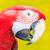 piros · tenger · művészet · óceán · madár · toll - stock fotó © tungphoto