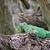 groene · leguaan · naam · maat · boom · portret - stockfoto © tungphoto