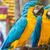 Rood · zee · kunst · oceaan · vogel · veer - stockfoto © tungphoto