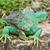 緑 · イグアナ · 皮膚 · テクスチャ · 自然 · 色 - ストックフォト © tungphoto