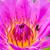 arı · nektar · çiçek · mor - stok fotoğraf © tungphoto