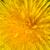 菊 · ミニ · デイジーチェーン · クローズアップ · マクロ · ショット - ストックフォト © tuulijumala
