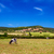cows are grazing upon the hills in sunny day at menorca spain stock photo © tuulijumala