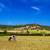 inekler · kuru · alan · gökyüzü · çim · manzara - stok fotoğraf © tuulijumala