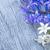 jardinagem · jacinto · fresco · flores · azul · pá - foto stock © tycoon