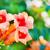textúra · gyönyörű · citromsárga · narancs · virágok · természet - stock fotó © tycoon