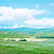 agradable · blanco · manzanilla · campo · cielo · azul · primavera - foto stock © tycoon