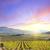 vineyard stock photo © tycoon