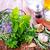 vers · organisch · bieslook · voedsel · hout · keuken - stockfoto © tycoon