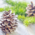 pinecones stock photo © tycoon