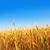 jó · naplemente · arany · aratás · puha · fókusz - stock fotó © tycoon