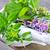 preparazione · fresche · erbe · fiori · aromaterapia - foto d'archivio © tycoon