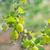 çalı · can · kullanılmış · yaprak · meyve · bahçe - stok fotoğraf © tycoon