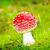 champignon · Rood · witte · vliegen · natuur · bos - stockfoto © tycoon