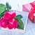 roses · note · carte · mères · jour · vintage - photo stock © tycoon